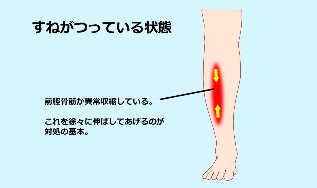 すね つる が の 足